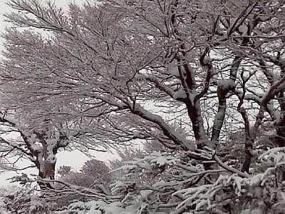 今年一番の大雪です。