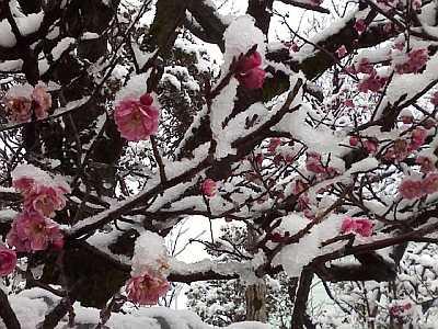 上雪(かみゆき)