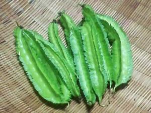 収穫した四角豆