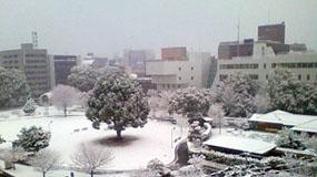 友人から送られてきた、熊本の積雪写真…珍しい!