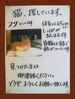 猫、探しています。見つけた方は御連絡ください。