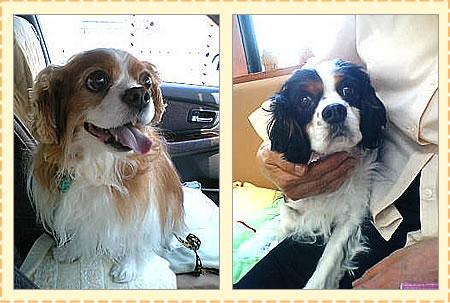 右:ママが大好き内弁慶のサクラちゃん☆<br /> 左:サクラの帰りを待つキラキラおめめのマリちゃん