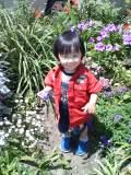 お花:レイ1
