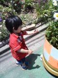 お花:レイ2