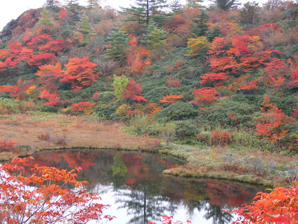 草津の紅葉