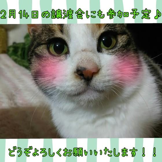 三毛  かぐちゃん.jpg