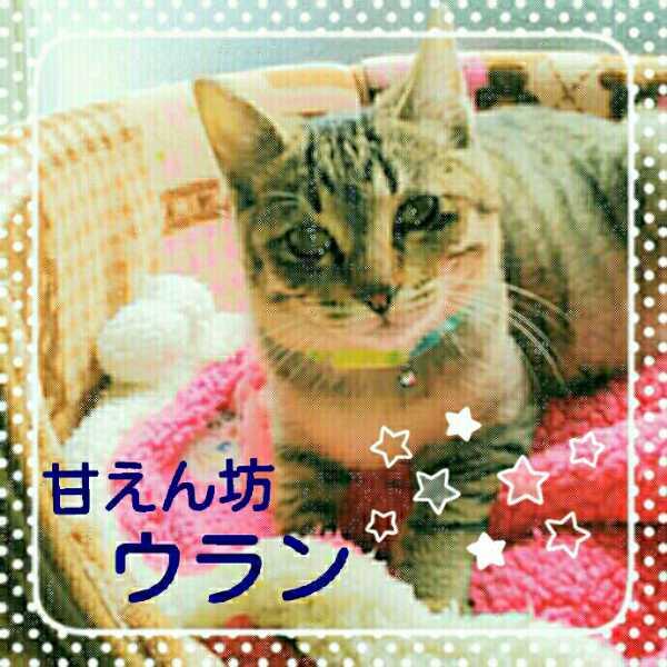 2016-12-14_104138_20161216164309.jpg