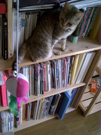 本棚のサツキ
