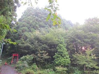 251010戸隠神社社叢