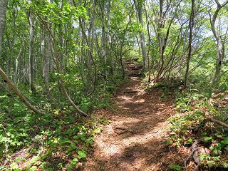 20140531米山水野林道ルート