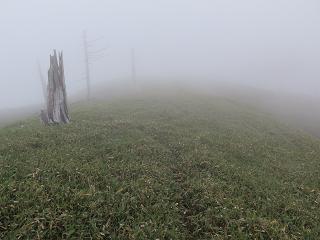 20150607丸盆岳登山道