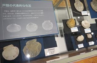 20150628戸隠の代表的な化石