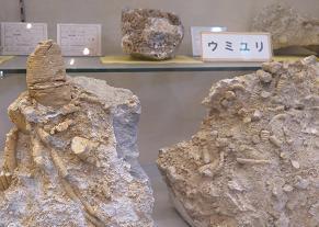 20150906ウミユリの化石