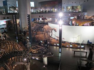 20151115恐竜展示