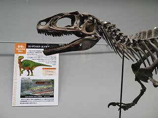 20151115コシサウルスカツヤマ