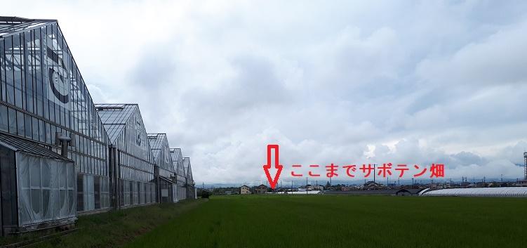 20180901サボテン園2.jpg