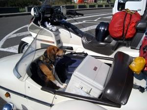 サイドカーに犬1
