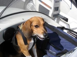 サイドカーに犬2