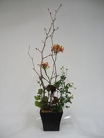 土佐水木とエビデンドロのアレンジメント