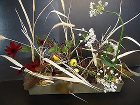 チョコレートコスモスとコワニーとエノコロ草