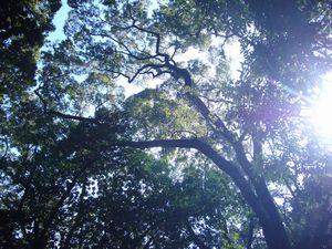 P1040820熱田神宮木々