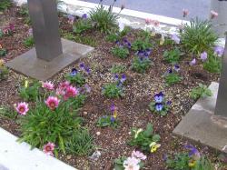 医院入り口の花