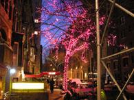 ピンクの枝