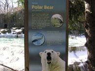 ズー白熊1