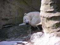 ズー白熊2