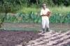 小大豆種蒔き