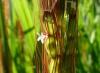 神丹穂の花