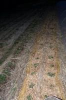 夜のいちご畑