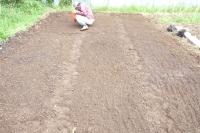 苗床に種蒔き