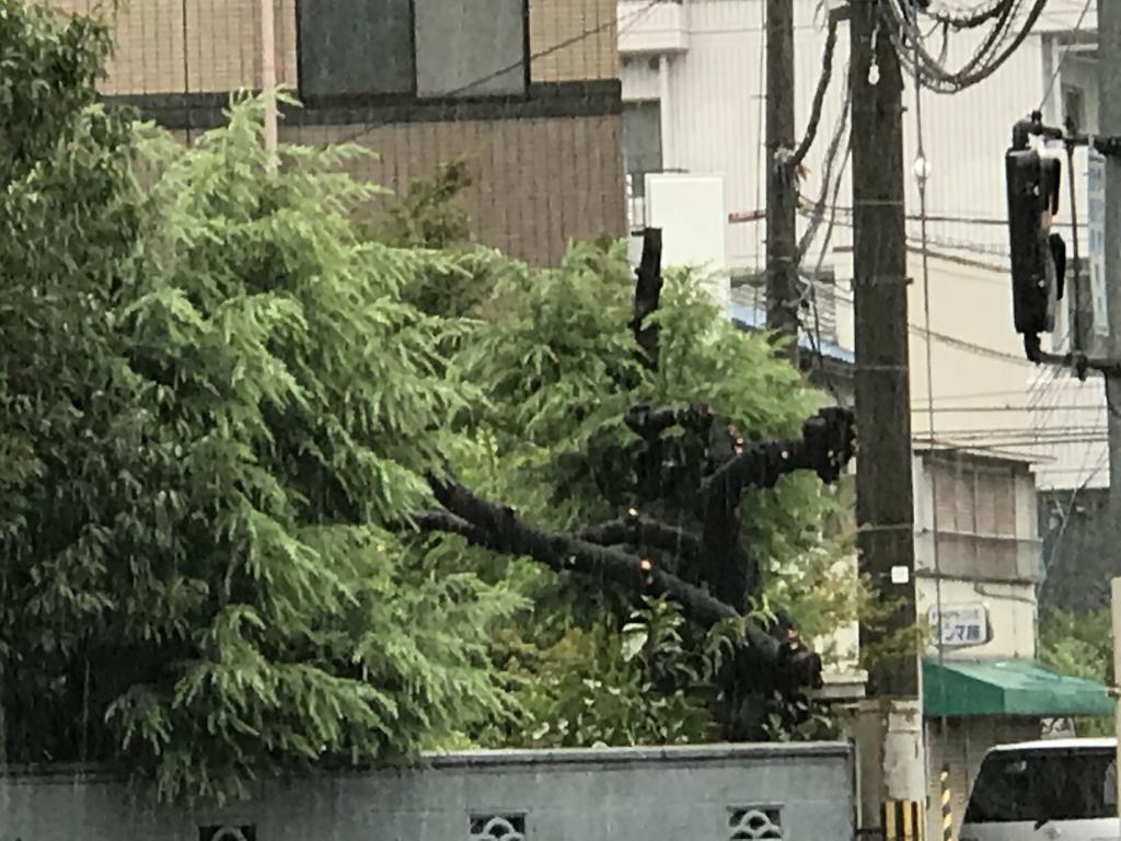 向かいの庭の木が折れています