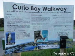 Curio Bay Warkway案内