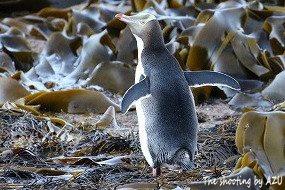朝のペンギン