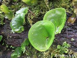 Monro Beach Walk の植物