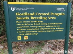 Fiordland Penguin 繁殖地