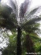 Monro Beach Walkの植物