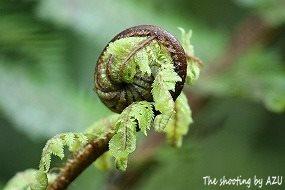 幻想的な植物