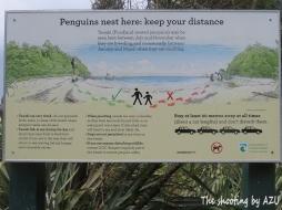 ペンギンに接近注意