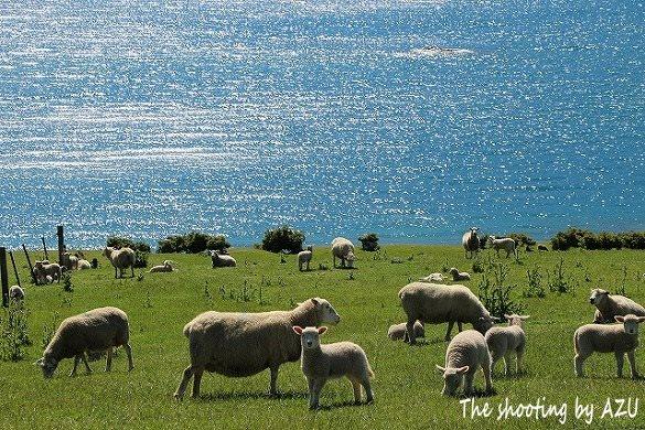 NZらしい風景