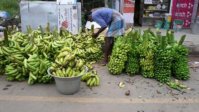 805 蛇公園 バナナ