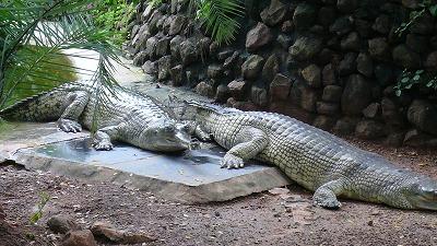 805 蛇公園 ワニー