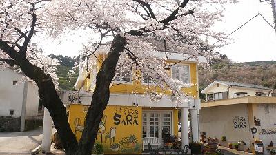 319 サラ 桜