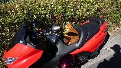979 Oxmoron cat