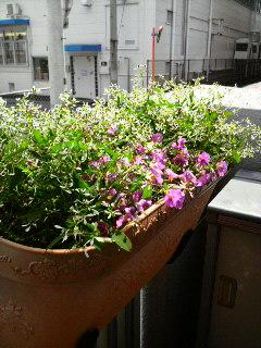 雨の後の花