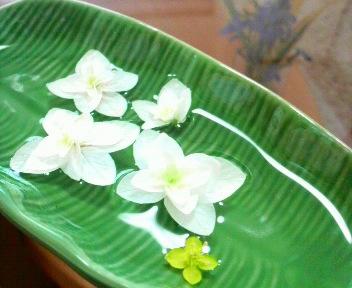紫陽花花びら