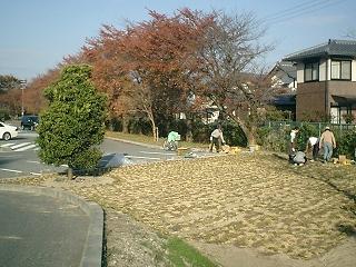 芝桜1121005