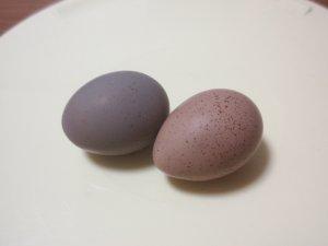 卵も左がぴっぴ、右がちっち